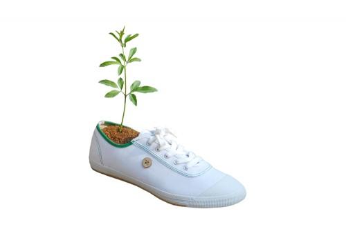 Chaussure blanche - arbre.jpg